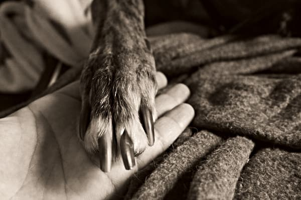 dog paw on hand